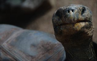 This 100 year-old tortoise has had so much sex he's saved his species