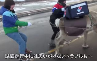 Domino's are getting reindeer to deliver pizza in Japan