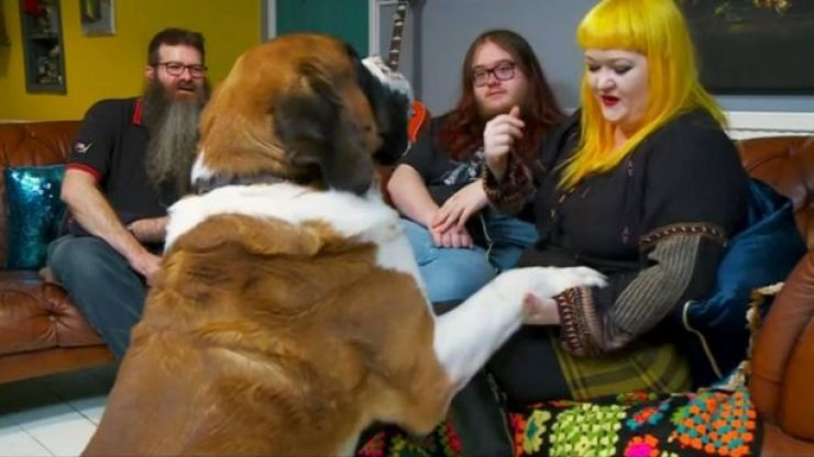 Everyone had the same reaction to this absolute tank of a dog on Gogglebox