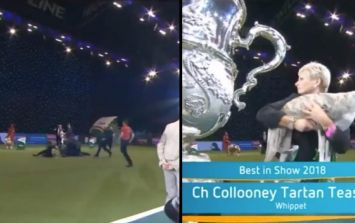 WATCH: Pitch invader causes chaos at Crufts