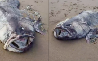 Huge 'monster' sea creature washes up on beach