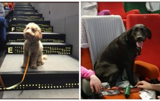 This cinema held a screening for dogs and it's the best thing you'll see all day