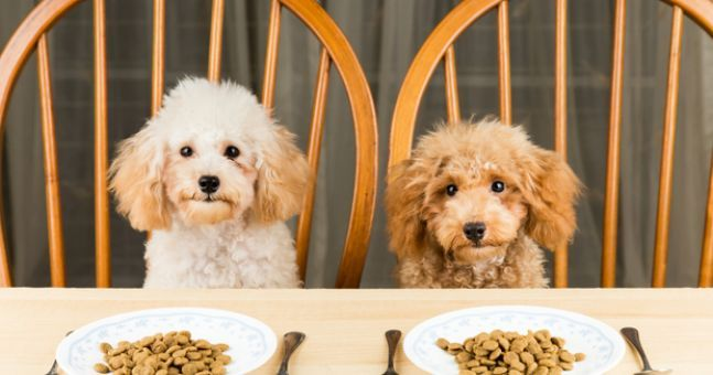 Study reveals certain dog foods which are dangerous for owners and dogs