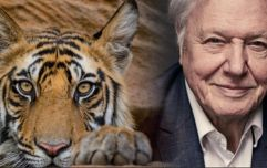 David Attenborough has a new nature show on the BBC and it's coming this year