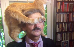 Dutch news TV interview brilliantly ruined by interviewee's cat