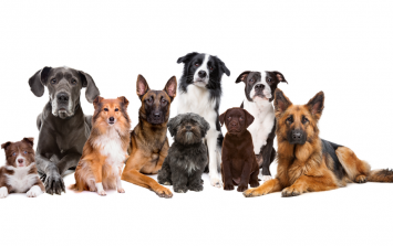 QUIZ: Guess the dog breed from a single picture