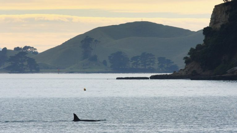 Killer whale and large shark both sighted off Devon coast