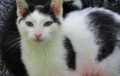 """New Zealand council proposes banning all cats in """"pest plan"""""""