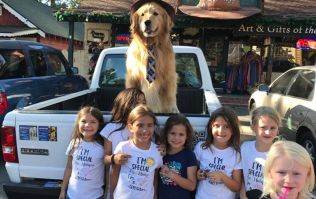 Town in America elects golden retriever as mayor because he is an extremely good boy
