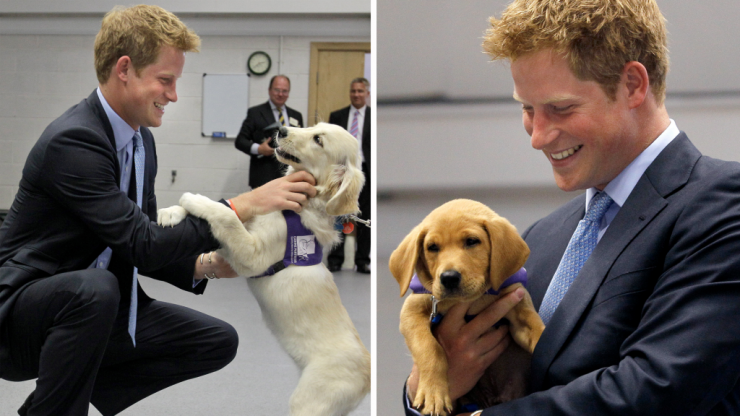 Definitive proof that Prince Harry can communicate with dogs