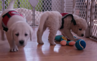 Netflix have made a documentary series that's all about dogs and our deep friendship with them