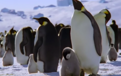 David Attenborough's next Dynasties documentary on emperor penguins looks spectacular