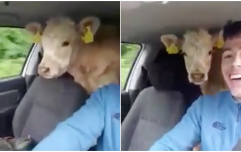 WATCH: This Irish farmer wasn't going to let a lack of trailer stop him moving cattle