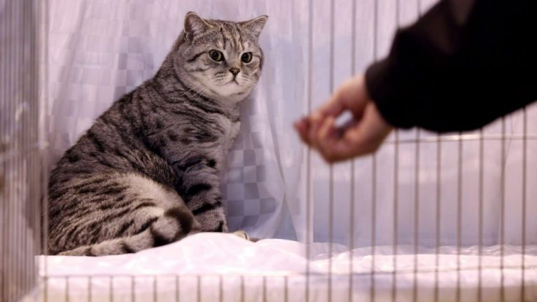 It turns out cats do recognise their names - and will ignore you just for the hell of it