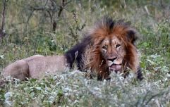 Suspected poacher killed by elephant and then eaten by lions
