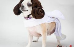 There is a Dog Cosplay event coming to the UK, if you want to dress your dog up as Iron Man or Darth Vader