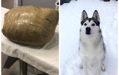 Woman returns from holiday to find dead pet husky wrapped in masking tape by kennel
