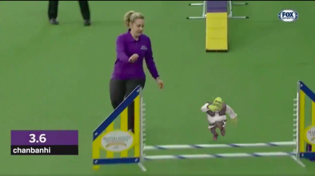 Someone Has Made A Video Of Shrek Running The Crufts Obstacle Course Joe Co Uk