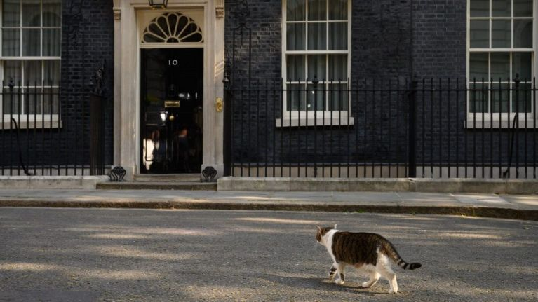 Larry the Cat had to be carried out of the way in order for Theresa May to resign