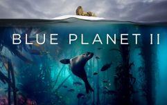 PSA: Blue Planet II is now on Netflix