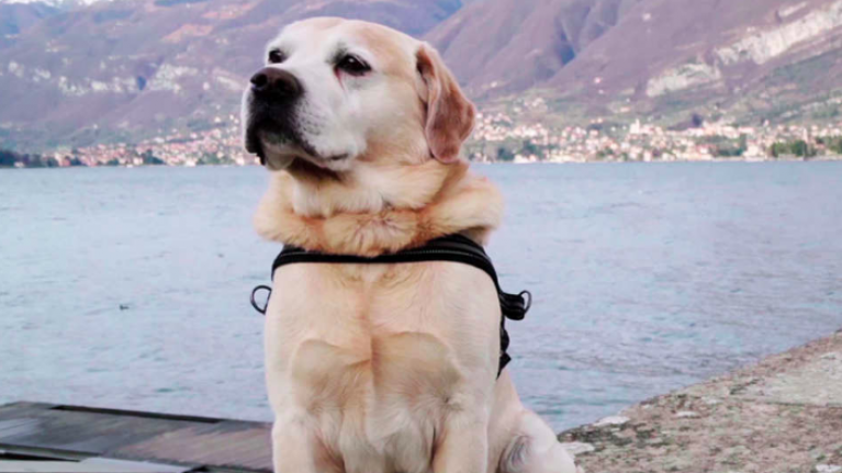 Netflix want to tell your dog's story in Season 2 of their beloved documentary series