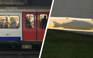 Which is the best way to commute - Underground Tube or fish tube?