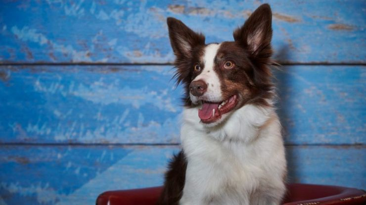 Furst Dates: Going speed dating with dogs
