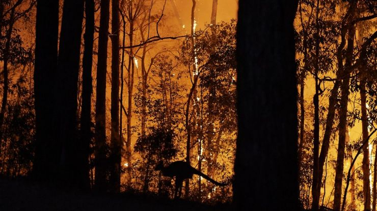 The terrifying scale of Australia's bush fires