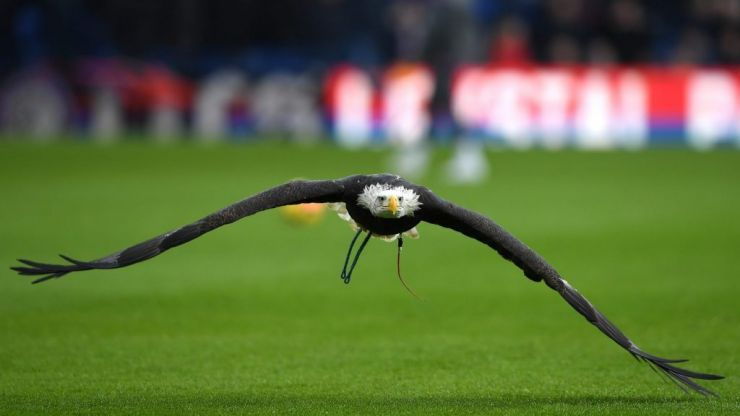 An ode to Kayla, Crystal Palace's beloved eagle