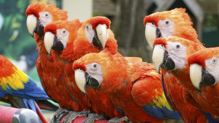Five parrots removed from wildlife park for constantly swearing at customers