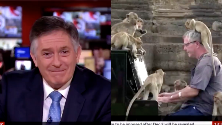 BBC newsreader cracks up on air presenting story on man playing piano for monkeys