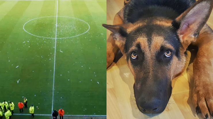 Bad dog causes Boxing Day football match to be abandoned