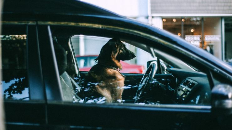 Tesco staff to patrol car parks to make sure dogs aren't locked in hot cars