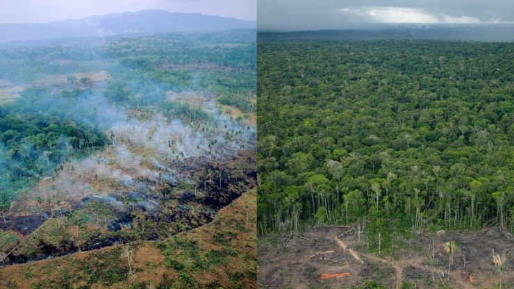 Amazon rainforest is emitting more greenhouse gases than it absorbs