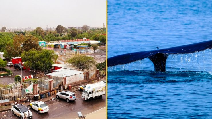 Yemen fishermen find fortune worth $1.5m in belly of a whale