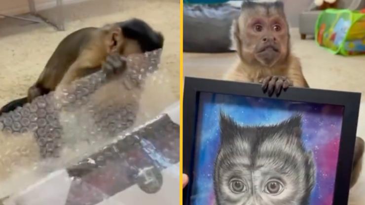 Beloved TikTok star and Capuchin Monkey George has passed away