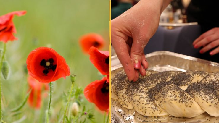 Man says he failed drug test for job after 'eating poppy seed bread'