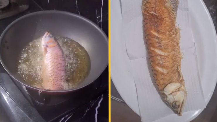 Wife 'deep-fries husband's pet fish for refusing to clean the tank'