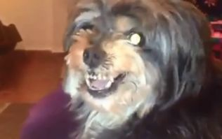 Video: No human being loves Lionel Messi as much as this dog does