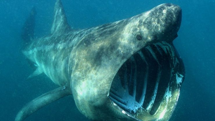 Pic: Irishman captures amazing photo of shark and surfer off the coast of Kerry