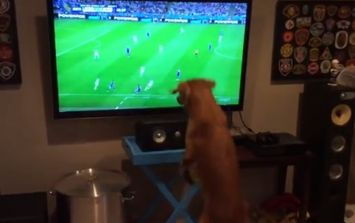 Video: This dog just loves watching the World Cup