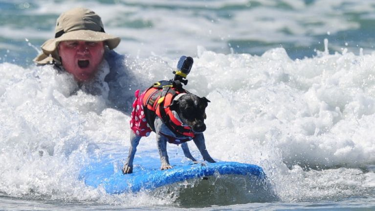 Video: This dog surfing competition is sure to put a smile on your face.