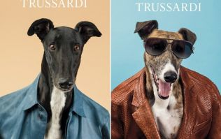 Pictures: Italian designer Trussardi swaps models for greyhounds in their latest collection