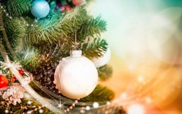 Not sure what to do with your tree after Christmas? There is a great alternative to dumping it
