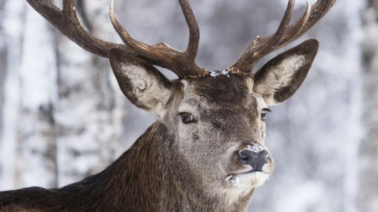 QUIZ: Can you name all of Santa's reindeer in two minutes?
