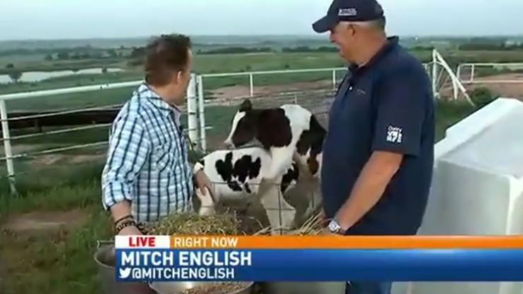 Video: Live news report interrupted by two cows having sex; reporter doesn't give two fu**s