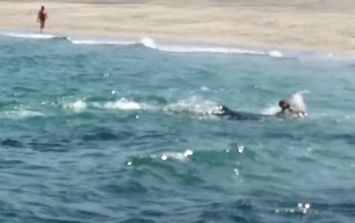 Video: We may have found the world's most pissed off dolphin in Galway