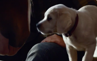 The best thing about the Budweiser Super Bowl ad is the 500 Miles cover