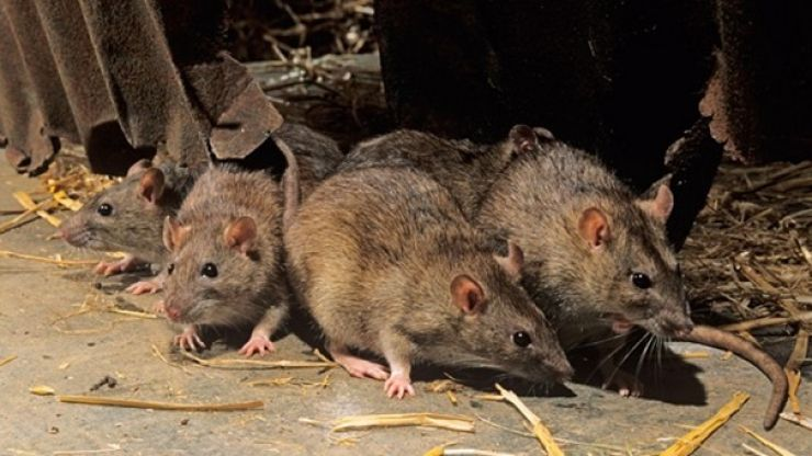PICS: Rats break into ATM, chew up over €15,000 worth of notes