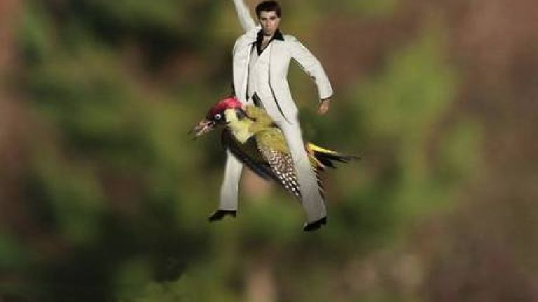 Pic Here Are The Best Photoshops From That Image Of A Weasel Riding Woodpecker
